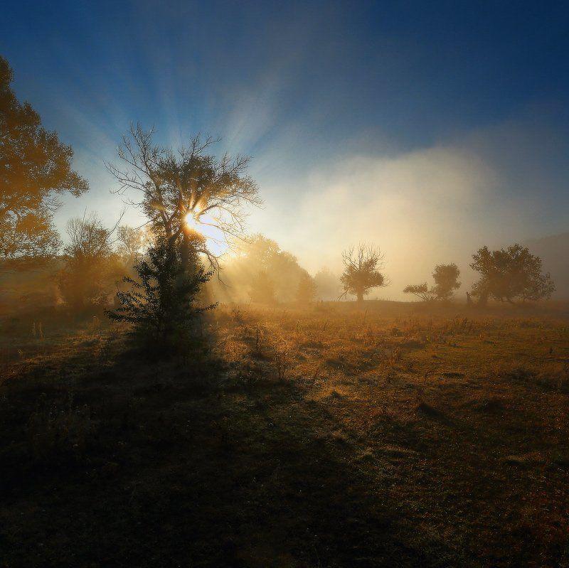 В туманном, утренним рассвете.photo preview