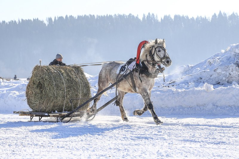 Алесей, Russia