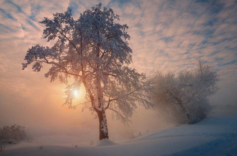 Морозное утро photo preview