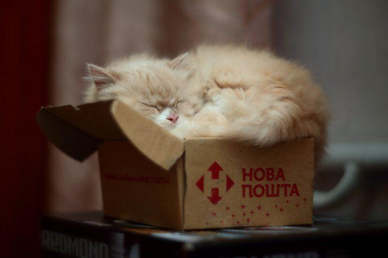 Тра-та-та, тра-та-та, нам доставили кота.photo preview