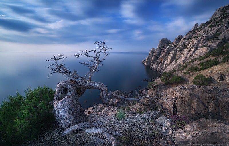 пейзаж, крым, ночь, луна, горы, дерево, скалы, море, облака, небо, ночной пейзаж, новый свет Ночь на Караул-Обаphoto preview