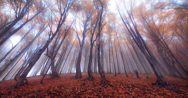 Карпаты, Лес, Осень, Пилипец ***photo preview