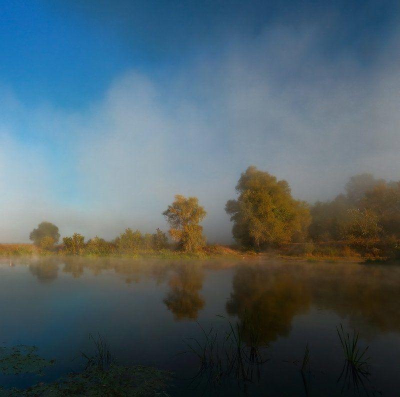 Тёплый туман деревья ласкает.photo preview