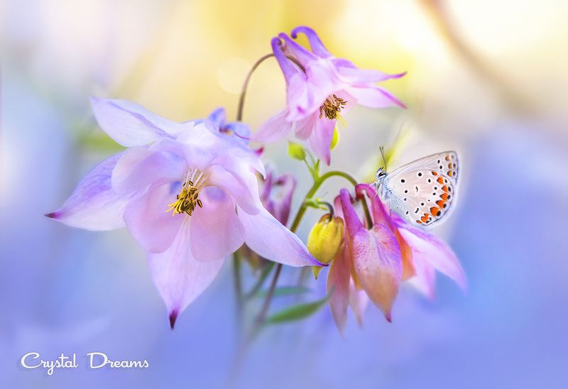 Art, Butterfly, Crystal Deams, Day, In color, Light, Macro, Nature, Tatiana Krylova \