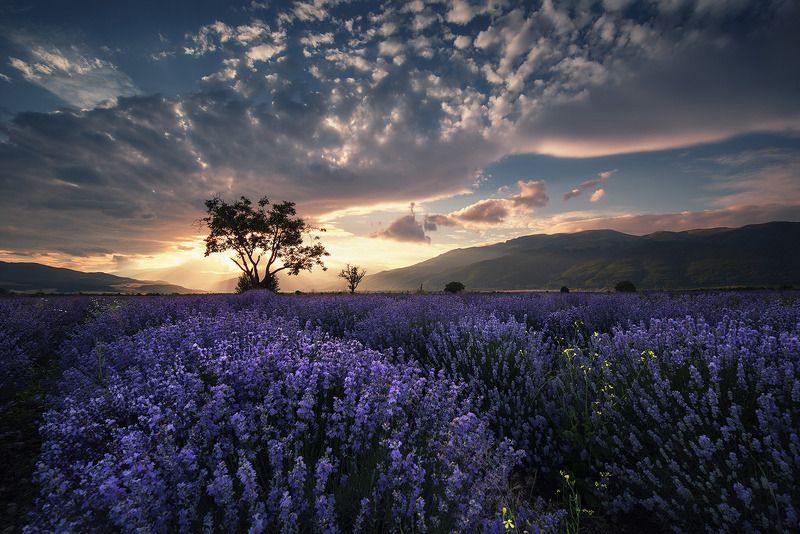 болгария Закат в стране лавандыphoto preview