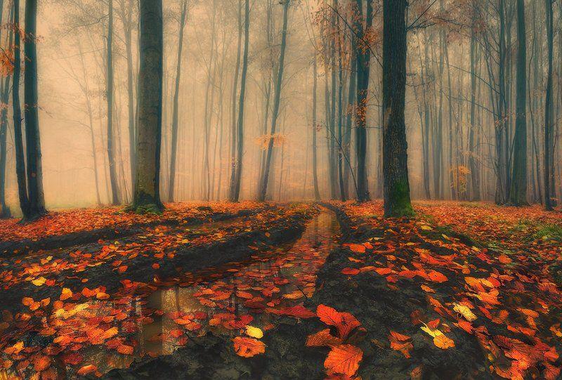 дорога, лес, листопад, осень, туман Время листопадаphoto preview
