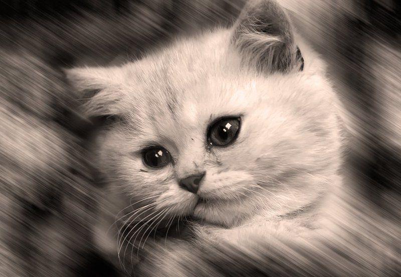 котенок Маленькое счастье, чтобы скрасить одиночествоphoto preview