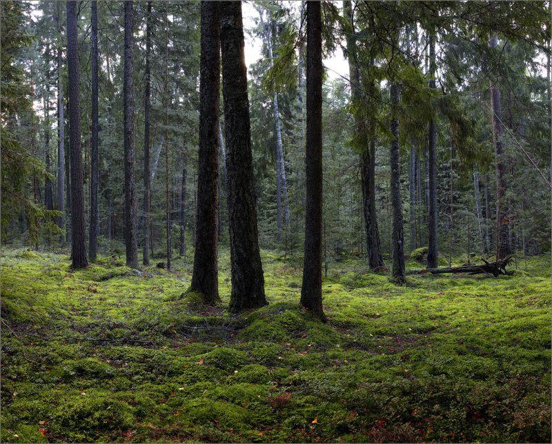 Сказка про лес...photo preview