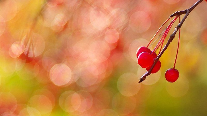 Осенний Яблокитайphoto preview