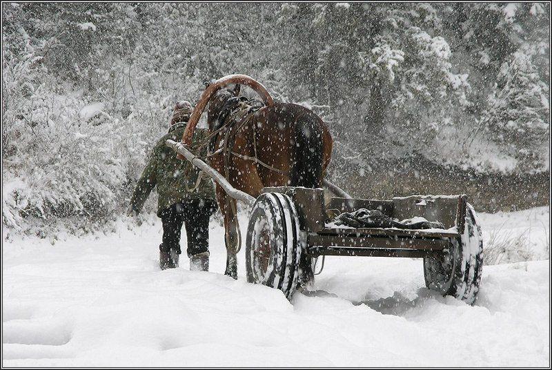 алтай, зима, снег, конь С утра шёл снегphoto preview