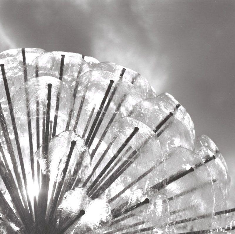 6х6, негатив, плёнка, b&w Одуванчик.photo preview