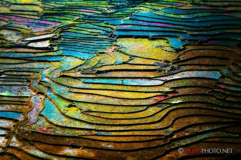 #quanphoto, #landscape, #colorful, #rice, #terraces, #farmland, #agriculture, #vietnam The color of flooded rice terracesphoto preview