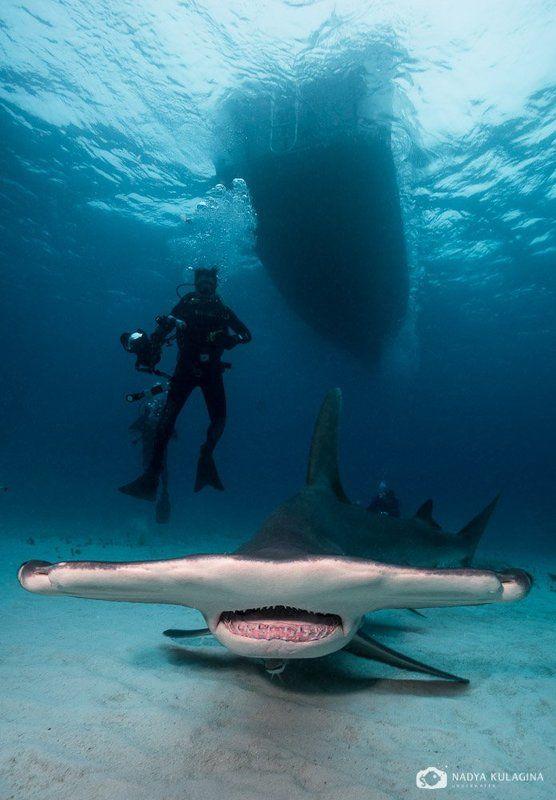 подводное фото, Боковое зрениеphoto preview