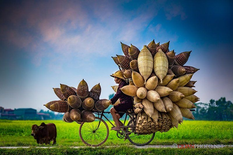#quanphoto, #travel, #rural, #countryside, #traditional, #bamboo, #fishtrap, #canola, #oldman, #vietnam The \