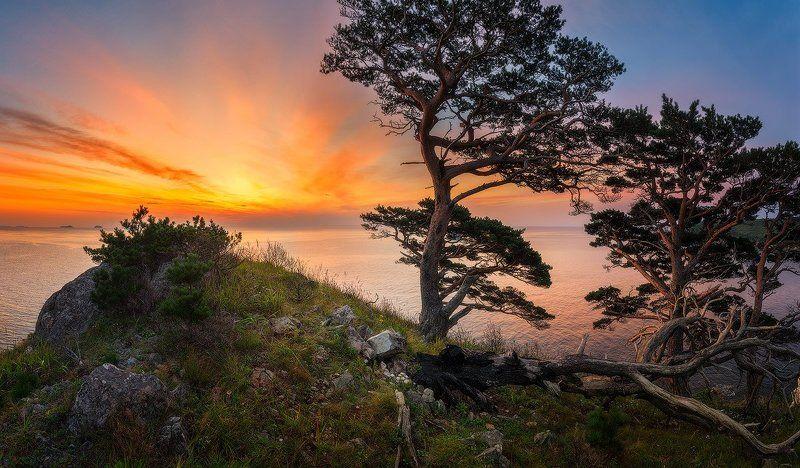 Закат, Заповедник, Море, Приморский край, Сосны Закат поколенияphoto preview