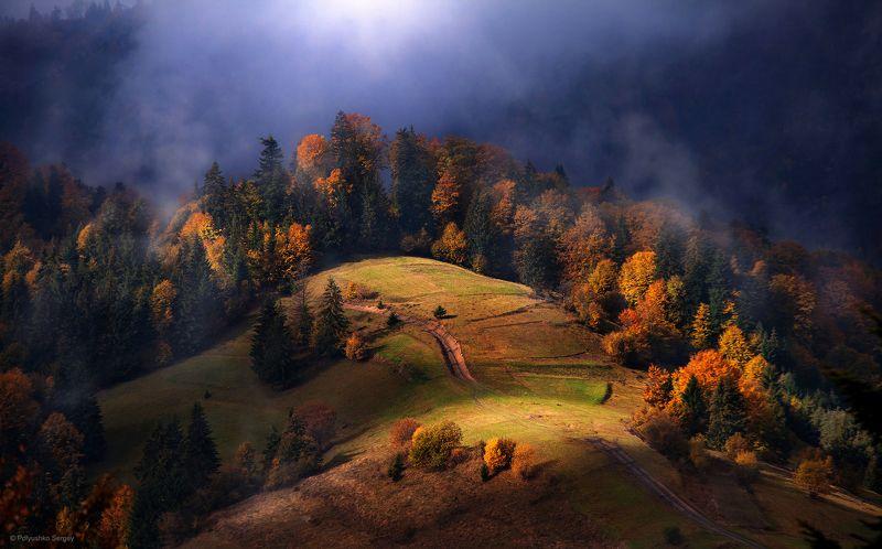Горы, Карпаты, Осень, Туман ***photo preview