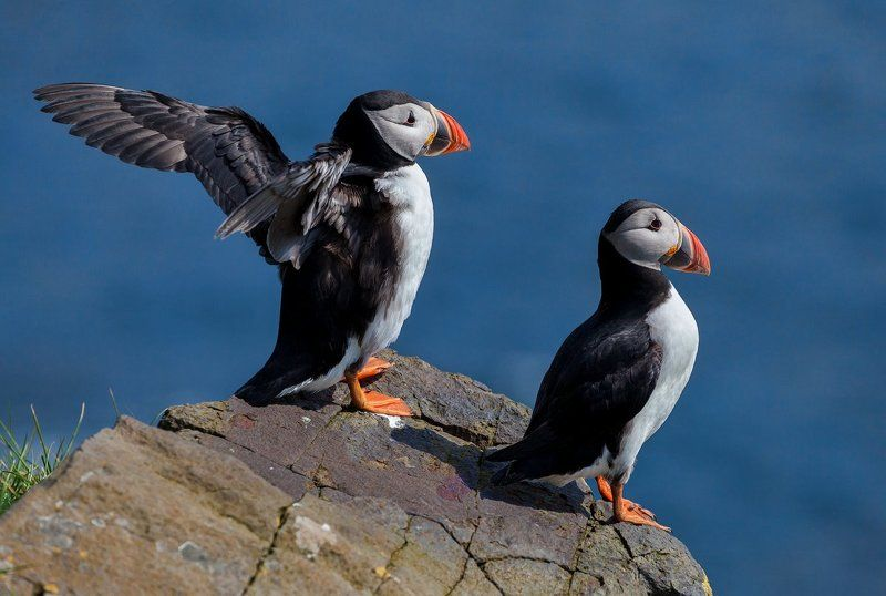 Faroe islands, Тупик, Фарерские острова, Фареры Эй, птичка, летим со мной - там столько вкусного! ©photo preview