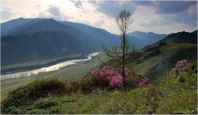Горный Алтай Вид на Катуньphoto preview