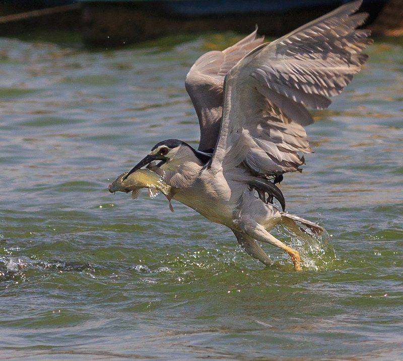 удачливый рыбакphoto preview