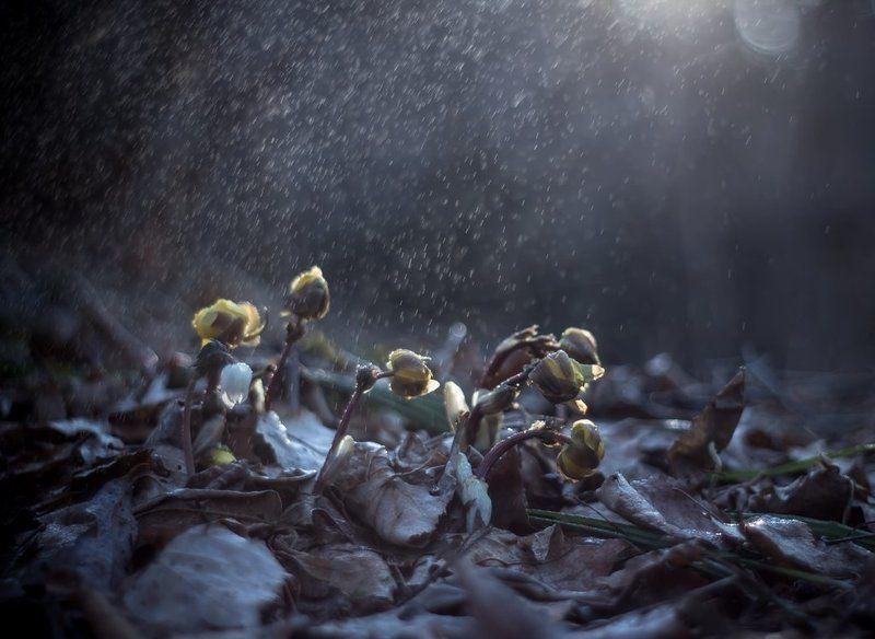 Весна шагает по планете...photo preview