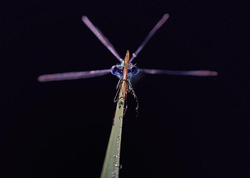 Геликоптерphoto preview