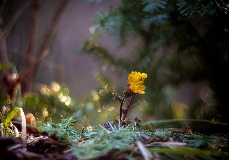 Радуясь весне...photo preview