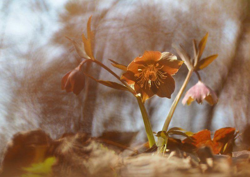 Весна цвета бежphoto preview