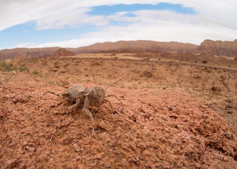 Марсианские хроникиphoto preview