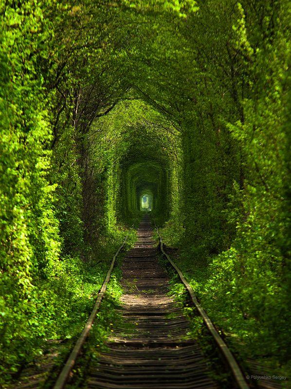 Весна, Клевань, Украина Туннель любвиphoto preview