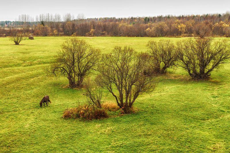 осень, деревья, луг, трава, лес, лошадь, пасется Старые ветлыphoto preview