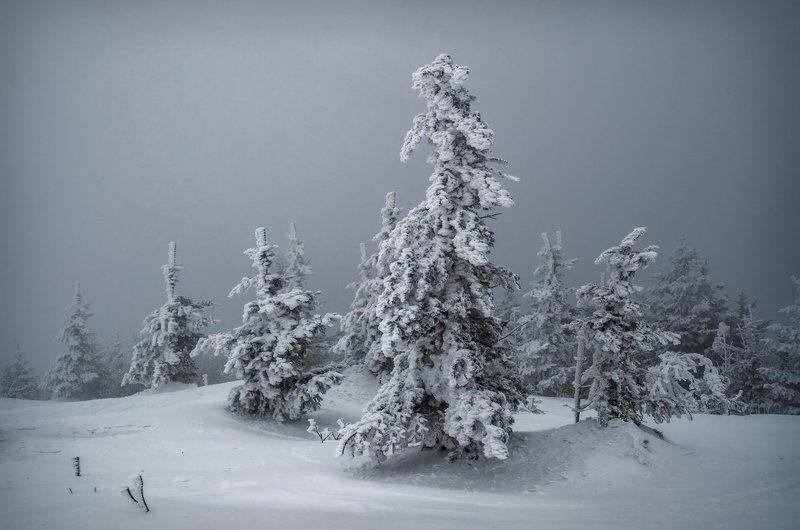 Ёлки, снег, туман, зима, Приморский край Замёрзшиеphoto preview