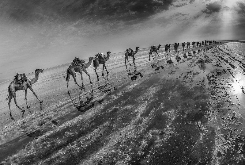 караван, соль, озеро, эфиопия, афары Караван (ч/б вариант)photo preview