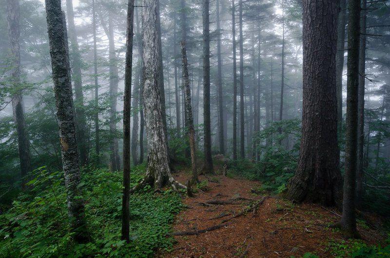 Туман, лес, сказка, тайга, Приморский край ...там леший бродитphoto preview