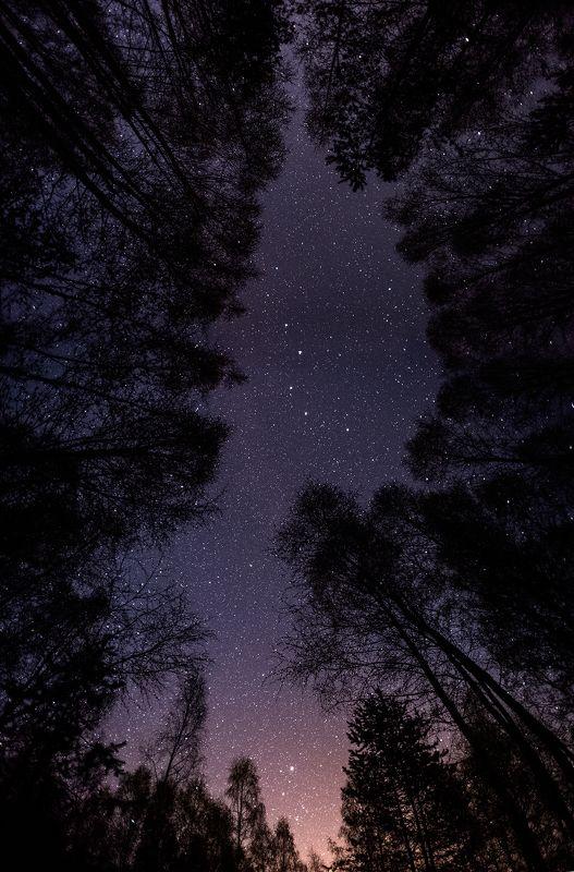 Ночь в майском лесуphoto preview