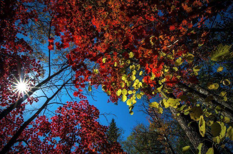 Осень, клён, листья, деревья, Приморский край Краски осениphoto preview