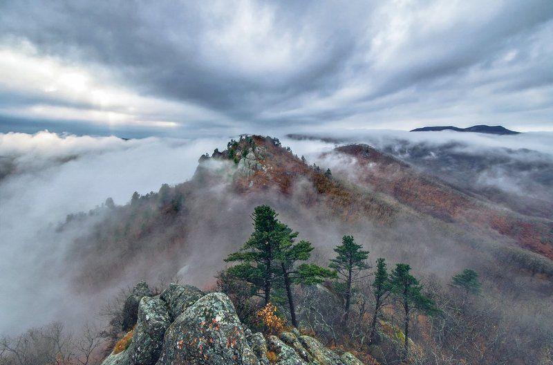 Туман, скалы, ёлки, Приморский край Игры тумановphoto preview