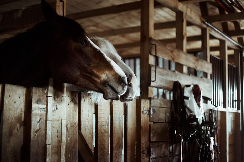 horses, stables for horses, steed, hoss, конь, лошадь, конюшня,  horsesphoto preview
