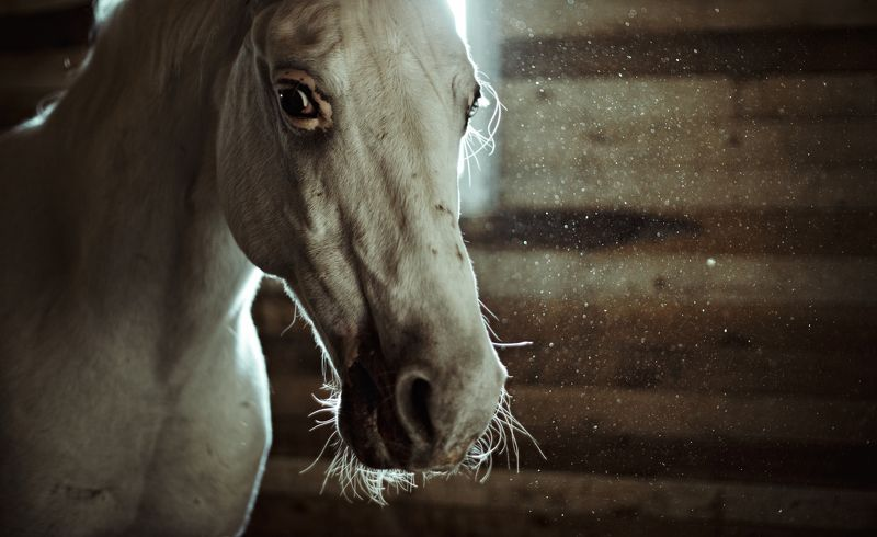 horses, stables for horses, steed, hoss, конь, лошадь, конюшня,  horses,photo preview