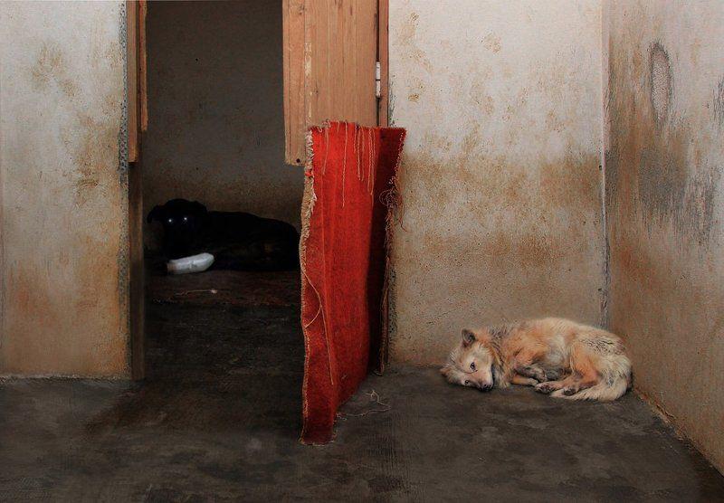 приют, собаки Дом  разбитых сердецphoto preview