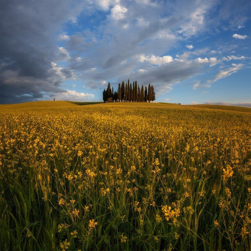italy, tuscany, италия, тоскана Кипарисы.photo preview