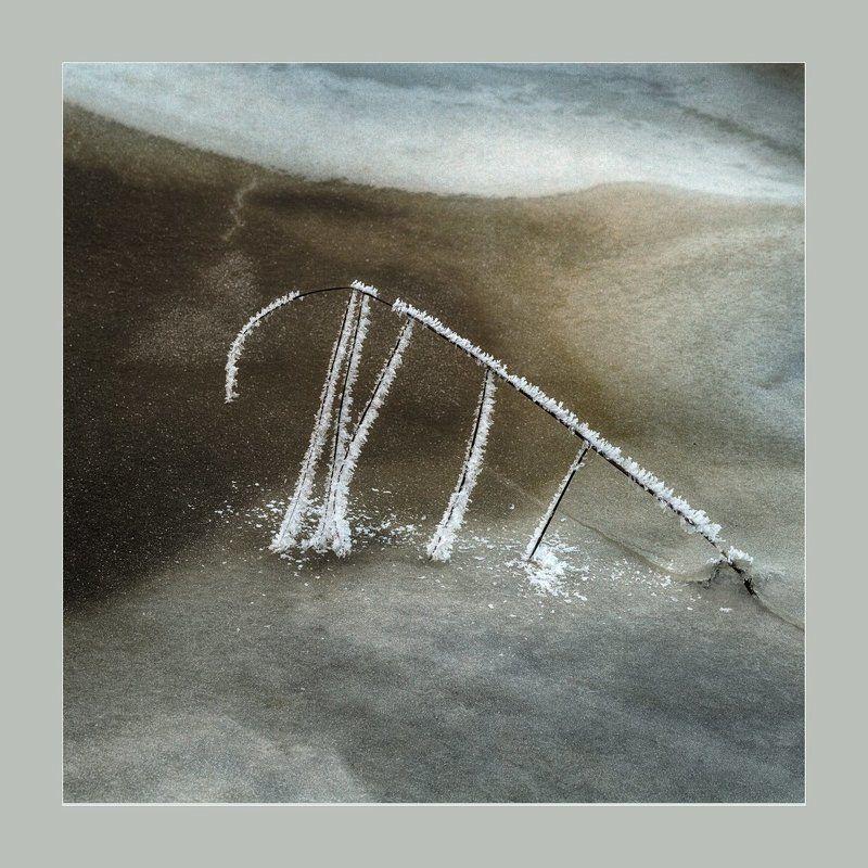 природа, ветка, иней, лед Рисует природаphoto preview