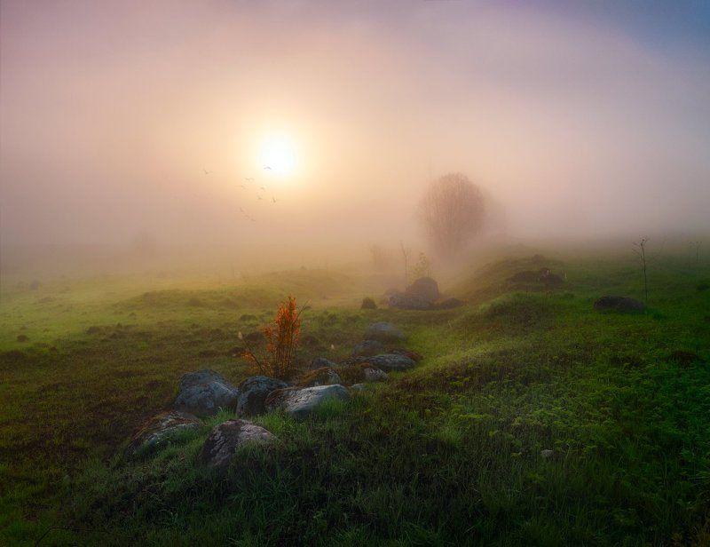 утро, солнце, рассвет, камни, поля Пробуждениеphoto preview