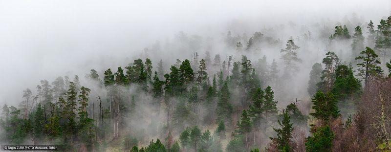 Кавказ, Тхач, пейзаж, панорама, туман, лес,  Живые склоны Большого Тхачаphoto preview