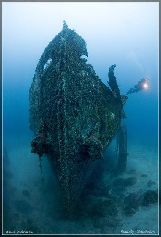 затонувшее, судно, imperial, eagle, средиземное, море, мальта, anatoly, beloshchin, side, mount Последняя гавань (подводное фото)photo preview