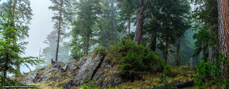 Zubr.photo, Горы, Кавказ, Лес, Панорама, Тхач Тишина дождливого лесаphoto preview