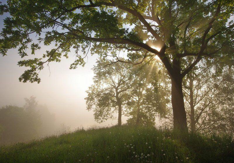 Как звучит утренний светphoto preview