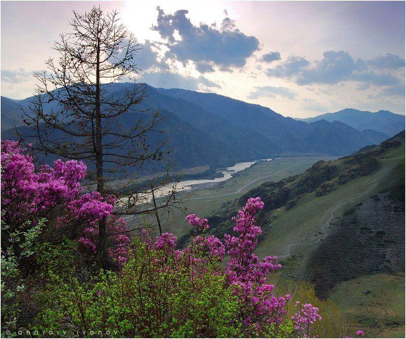 Алтай горный, Катунь, Маральник Лики Катуниphoto preview
