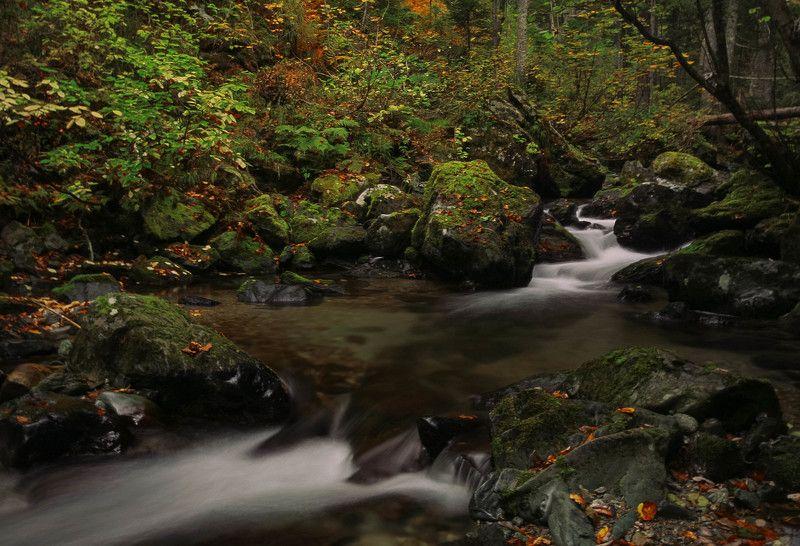 Заповедные реки Сахалинаphoto preview