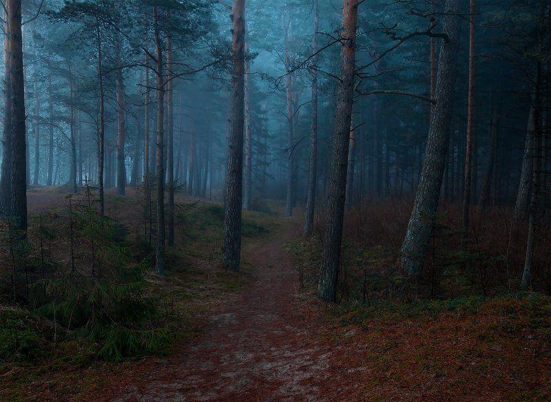 атмосфера, ключенков, лес, пейзаж, туман, эстония В темно-синем лесуphoto preview