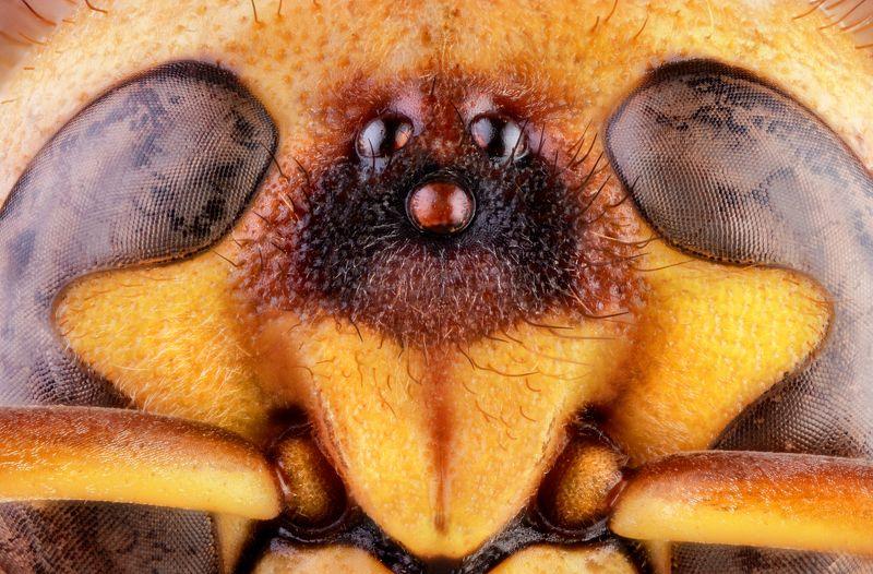 macro wild wasp insect nikon georgia WASPphoto preview